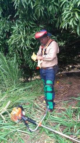 Roseria, mantenimiento de jardines, poda de arboles
