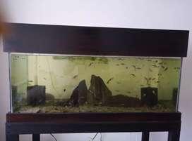 Vendo acuarios