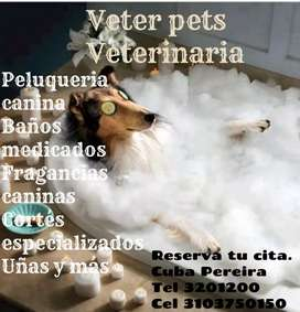 Spa canino y felino