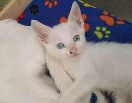Adopcion de gatitos