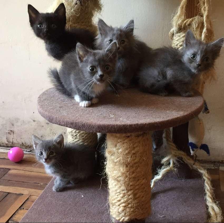 Gatitos en adopción 0
