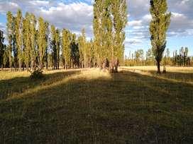 Chacra de 17.8 hectáreas en producción en Las Lajas (Neuquén)