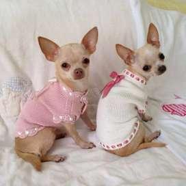 lencería mascotas