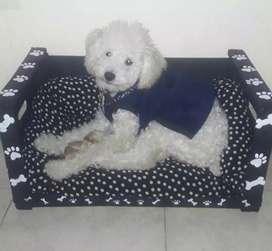 Camas y almohadones para mascotas