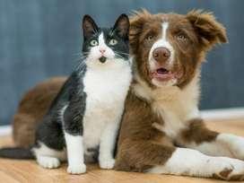 ANTIPULGAS para perros, elimina  garrapatas,pulgas, acaros,gusanos