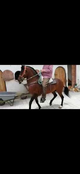 Se vende caballo  muy bueno