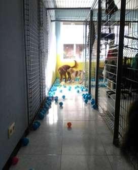 Hospedaje para mascotas