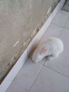 vendo conejos