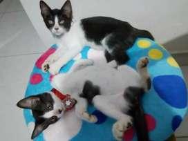 Gaticos para adopcion