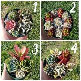 Hermosos mini arreglos, mini jardines de cactus y suculentas en macetas recicladas.