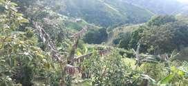 se vende finca en la unión valle vereda ajisal