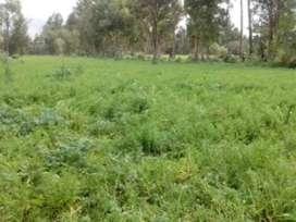 Venta de terreno ubicado en Chupaca