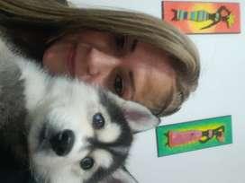 Vendo cacharro lobo huski  3 meses