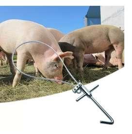 Atador Para Cerdos, Soga, Cuerda En Acero Inoxidable