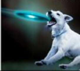 Frisbee para Perro con Luz Led