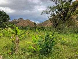 Economico terreno de 1.5 hectareas en venta en tumianuma