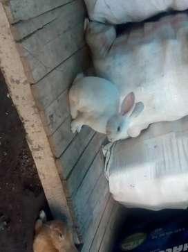 Hermosos conejos a 20.000