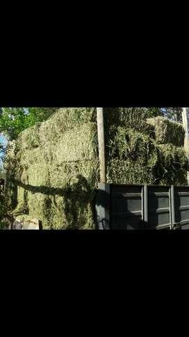 Vendo Fardo de Alfalfa