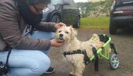 Silla de ruedas para perros en Peru