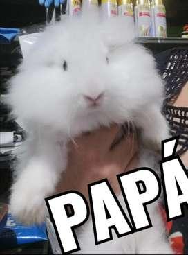 Conejos Reproductores en venta con todo y jaula