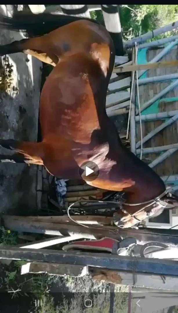 Venta de hermoso caballo