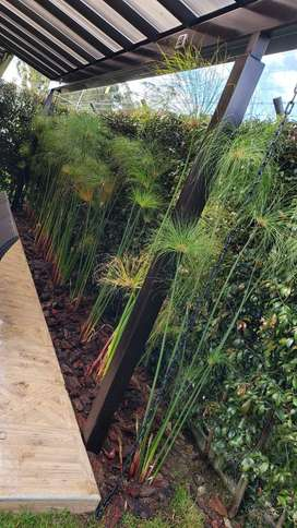 Jardinerira plantas y todo tipo de decoración