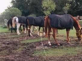 Mantas para caballo impermeables