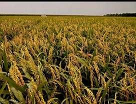 Finca Productiva en Agricultura de 25 hta en Puerto López, Meta