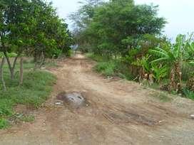 Alquilo  Terreno en plena Panamericana Norte