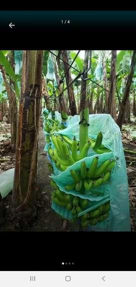 Bananera en El Retiro 8.3 has
