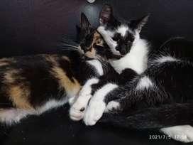 Se dan en adopción dos gaticas