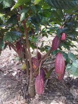 Vendo finca de 21 hectareas en Quininde el Mirador