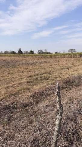 Vendo 6 hectáreas en santa rosa leales