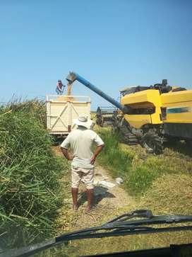 Vendo maquina cosechadora