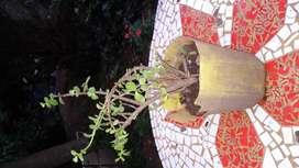 Planta de la Moneda