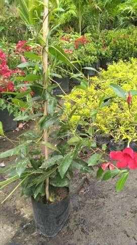 hermosas plantas para su jardin