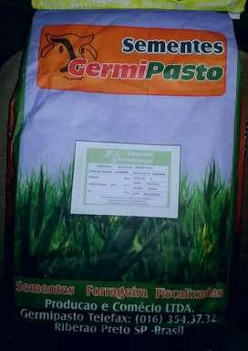 Venta de semillas de pasto o hierba