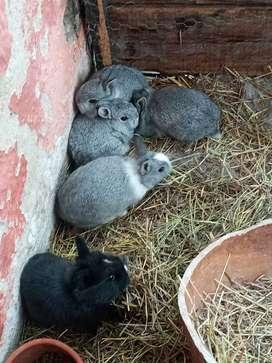 Vendo conejos Bonsai