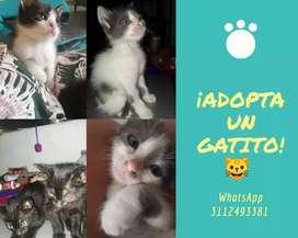 Gatos en adopción responsable