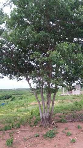Lote ubicado en sector Los Almendros