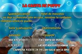 guarderia y hotel de mascotas en soacha