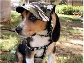 Sombreros con estampado militar y floreado para perros