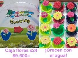 Caja Flores Pasta X 24