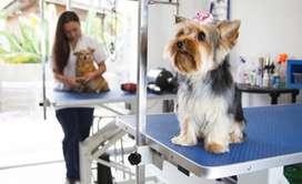 Se busca peluquero canino