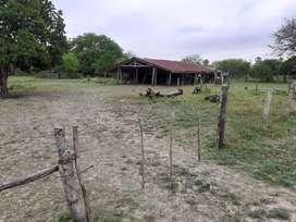 SE VENDEN 336 has en Pastoril-Formosa