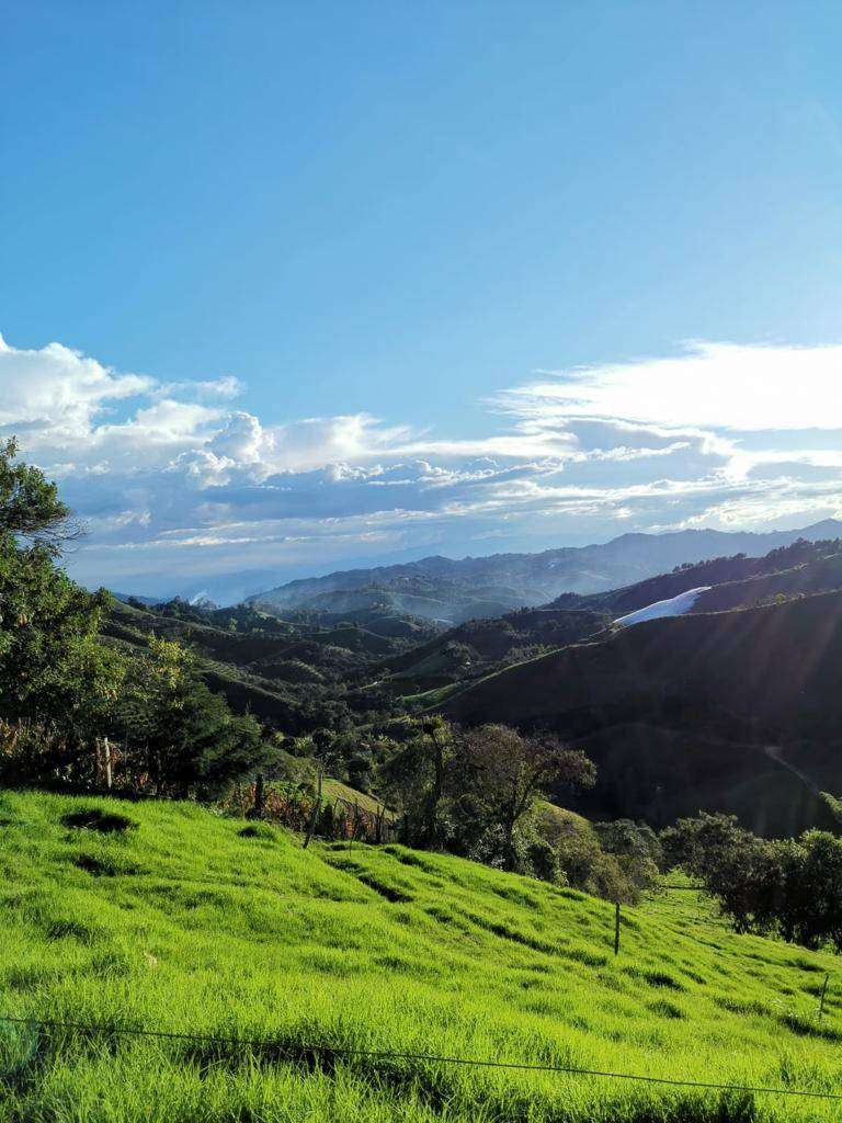Venta de Finca Agrícola en Abejorral 20 Hect (200.000 m2) apta para producción de aguacate Hass