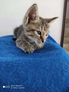 Hermosa gatica para adopción responsable en la ciudad de Cali