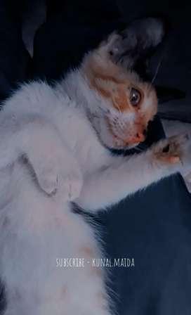 Doy en adopción una gatita