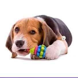 Juguete Perros Goma Texturizado Didáctico Mascotas 14213-45