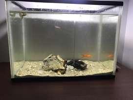 Pecera de 30L con accesorios y peces